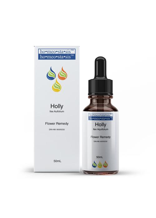 Holly-Ilex-Aquifolium-(DIN-HM-80005232)