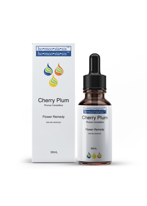 Cherry-Plum-Prunus-Cerasifera-(DIN-HM-80005322)